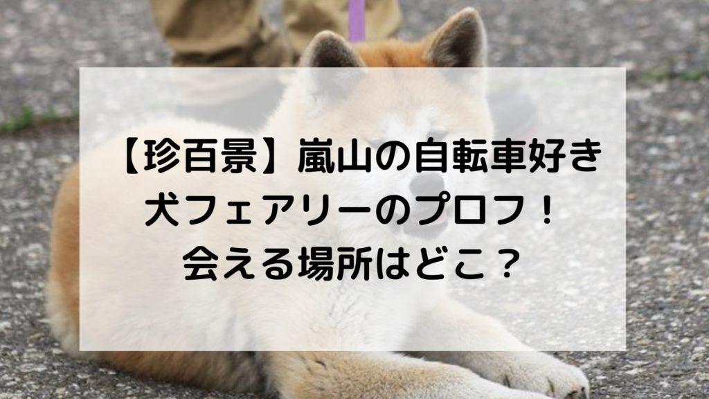 嵐山秋田犬珍百景